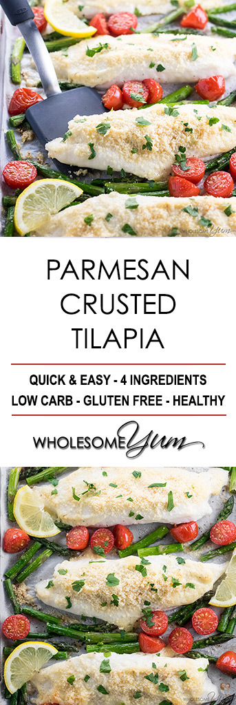 Easy Baked Parmesan Crusted Tilapia Recipe with Mayo - Just 4 ingredients needed for this easy Parmesan crusted tilapia recipe in the oven. Add veggies for a sheet pan dinner. Only 15 minutes start to finish!